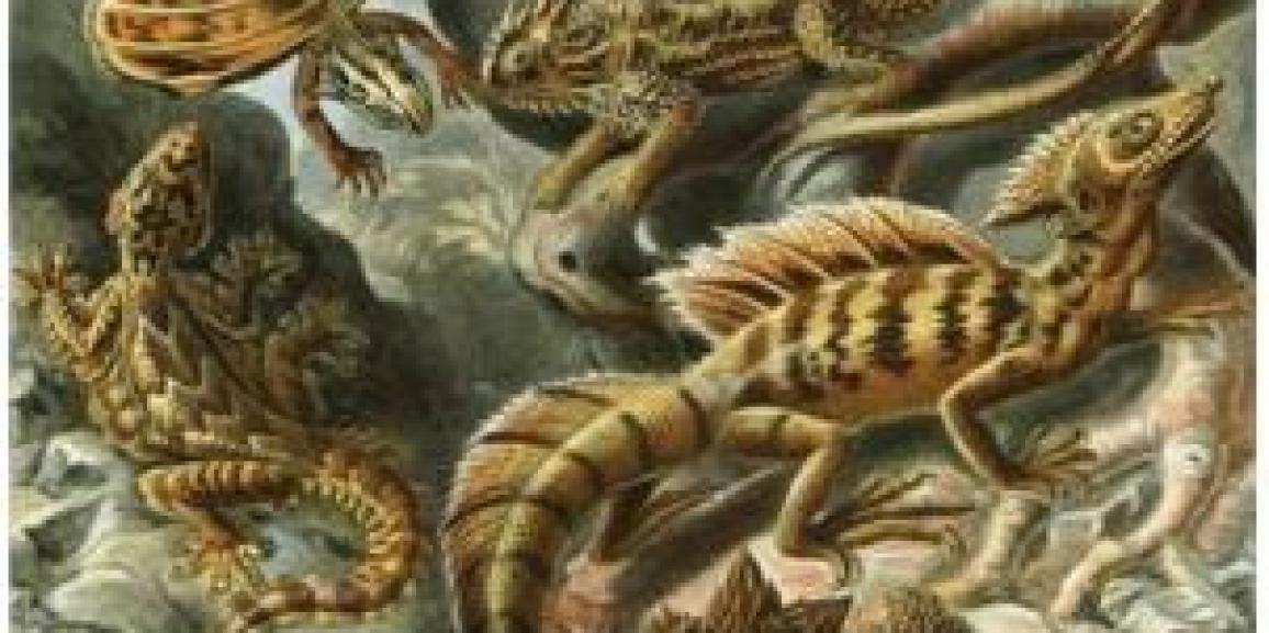 Charlas sobre reptiles ofrecidas por el laboratorio de Ecofisiología e Historia