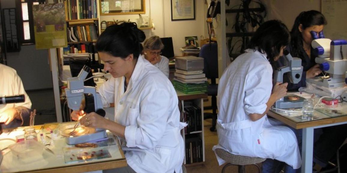 """Los exploradores de la """"biodiversidad oculta"""" en los peces patagónicos"""